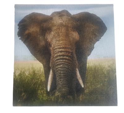 Print op canvas olifant - Multicolor - Canvas - 18 x 18 cm