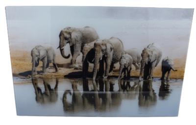 Schilderij olifant - Glas - 57x37cm