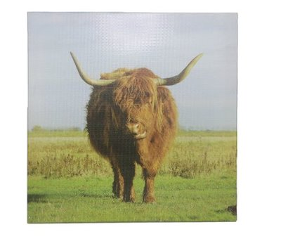 Canvas Stier - Multicolor - 45 x 45 cm