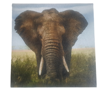 Print op canvas olifant - Multicolor - Canvas - 18 x 18 cm